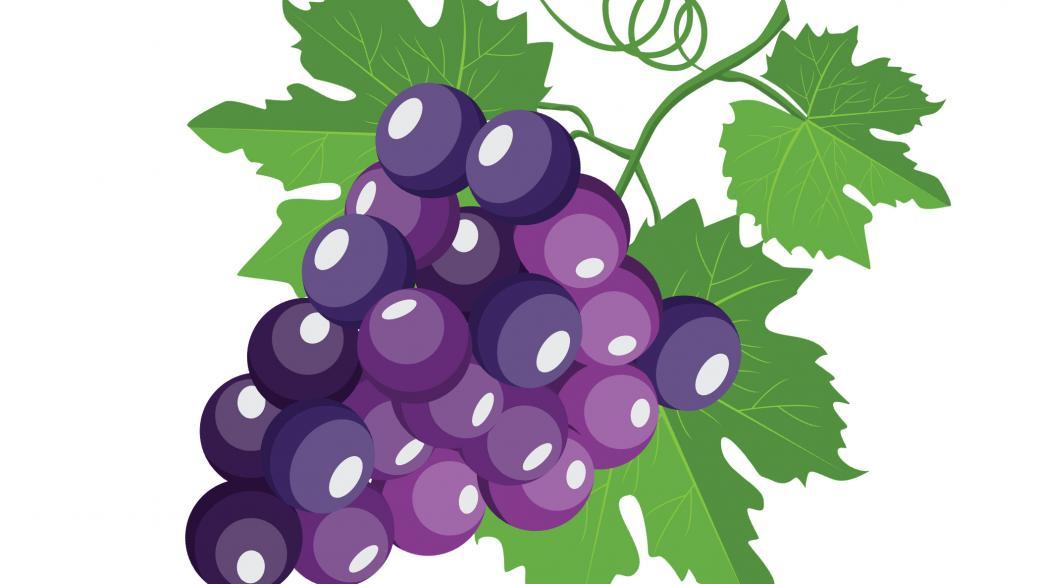 Pusťte si pohádku ze slunných vinic