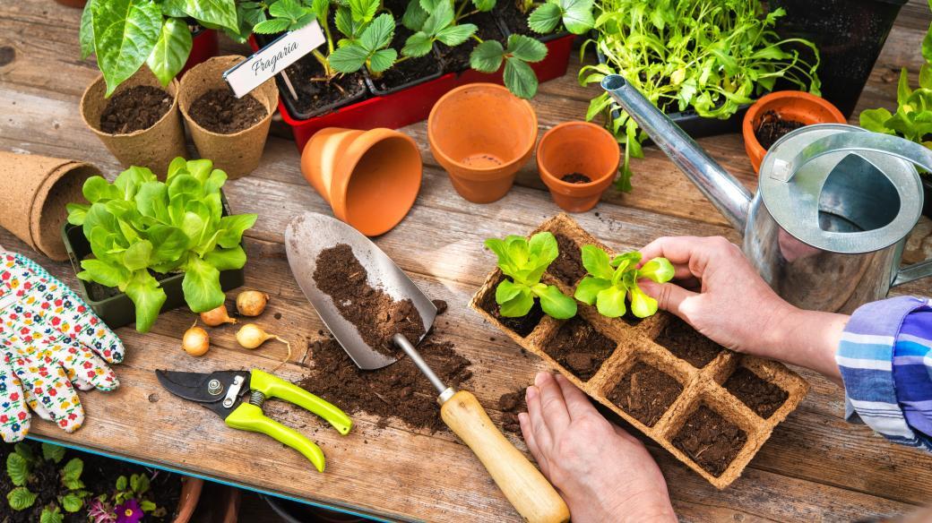 Zahradničení, sázení